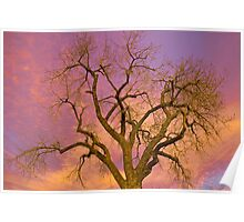 Colorful Cottonwood Pastel Sunset Poster