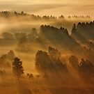 Misty Morning by Martin Rak