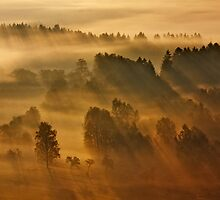 Misty Morning by Martin Rak