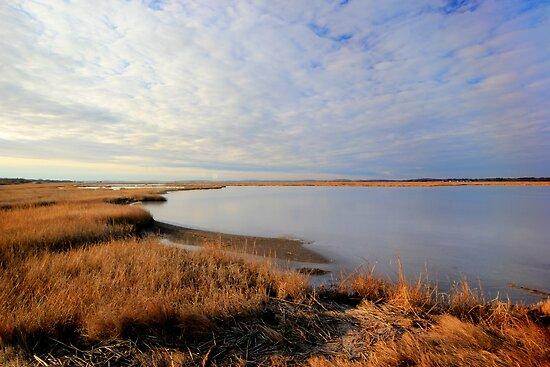 Parker River Wildlife Sanctuary: January 2012 by john forrant