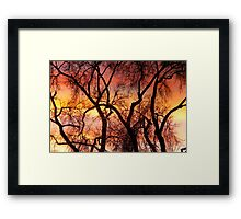 Colorful Silhouetted Trees 22 Framed Print