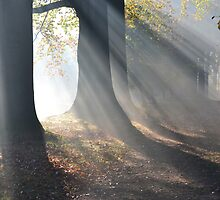 Trees in The Mist. by Carla Maloco