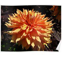 Dahlia Orange glow Poster