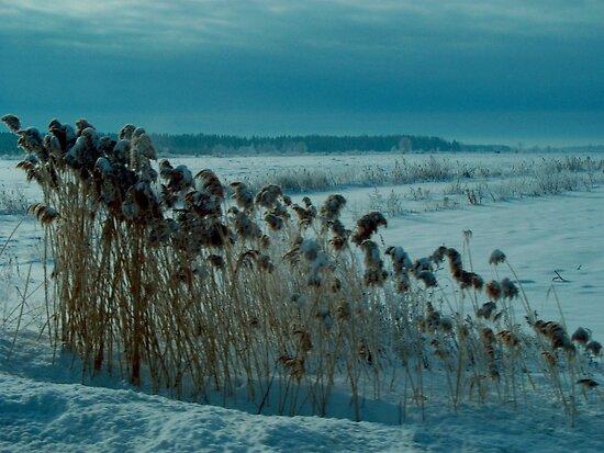 Brrrrr ! by Elfriede Fulda