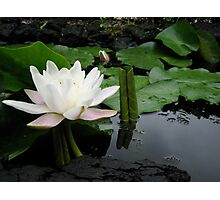 Flower of lotus Photographic Print