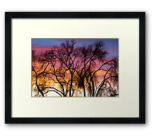 Colorful Silhouetted Trees 26 Framed Print