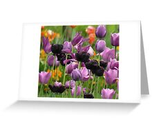 Beauty Surrounds Greeting Card