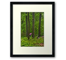 Walking in the Forest Framed Print