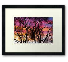 Colorful Silhouetted Trees 27 Framed Print