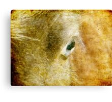 Blue Eyed Mini Filly Grunge Texture Canvas Print
