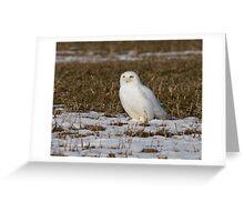 Snowy on a Corn field Greeting Card