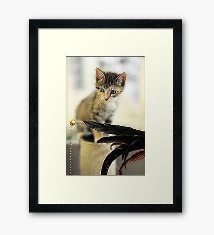 Playing Kitten Framed Print