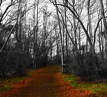 Path in the Woods by korymatu