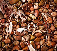 Polished Rocks by korymatu