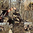 Logging Timber ~ Best Viewed Large by barnsis
