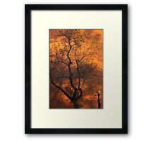 Gold Rush Tree Framed Print
