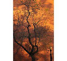 Gold Rush Tree Photographic Print