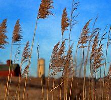 The Prairie Beckons by Brian Gaynor