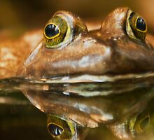 Kiss  the Frog and Free the Prince  by John44