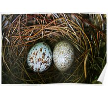 Eggs in a nest Poster