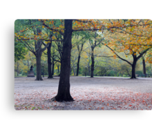 Old beech trees in autumnal park  Canvas Print