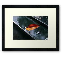 Autumn yellow-red leaf with drops in the rain on the bench Framed Print