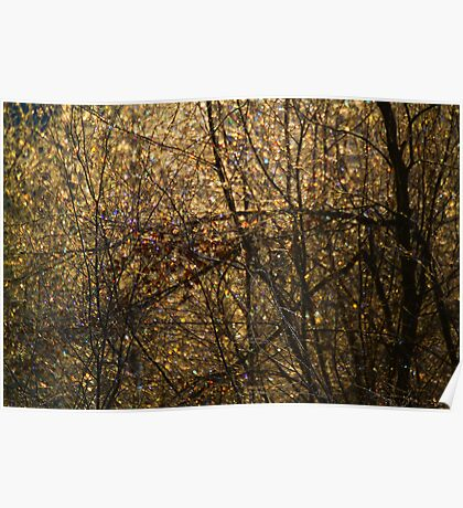 Morning light and dew on the willows Poster