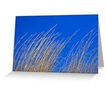Dry Grass on Blue Sky Greeting Card
