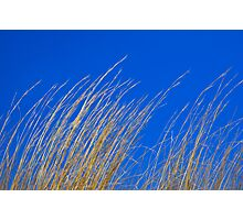 Dry Grass on Blue Sky Photographic Print