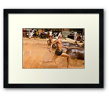 Close Finish at the bull race! Framed Print
