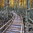 Mangrove Forest by Adrian Evans