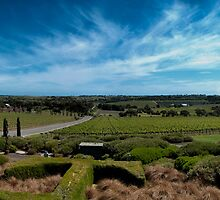 Tapestry Wines, McLaren Vale, South Australia by SusanAdey