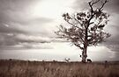 Tree and Donkey by yolanda