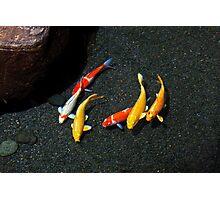 Colorful Koi Fish Photographic Print