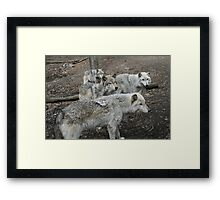 Gang Of Four Framed Print