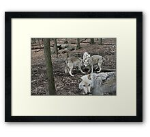 I Wouldn't If I Were You Framed Print