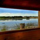 Wetlands through the window by Robyn Forbes