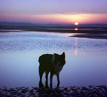 Sunset at the beach with Indy by Michael Haslam