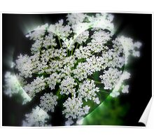 Queen Anne's Lace Heart Poster