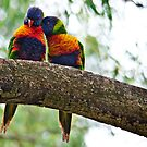 Two Rainbow Lorikeets (Trichoglossus haematodus) experience their first kiss by Nick Egglington
