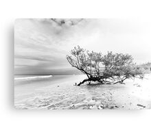 low key beach study Metal Print