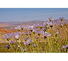 Mojave Asters and Desert Landscape Photographic Print