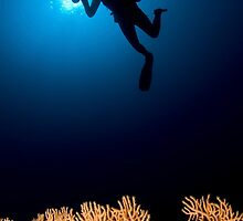 Underwater photograph of a diver swimming above an Anella Alcyonacea (soft corals) coral by PhotoStock-Isra