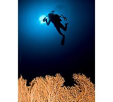 Underwater photograph of a diver swimming above an Anella Alcyonacea (soft corals) coral Photographic Print