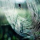 web by waitin' for rain