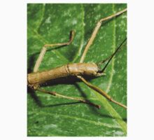 Tiny Stick Insect Kids Clothes