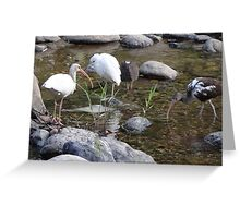 Heron And Ibis - Garza Blanca E Ibis Greeting Card
