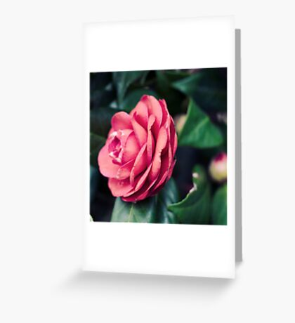 happy to be. Greeting Card