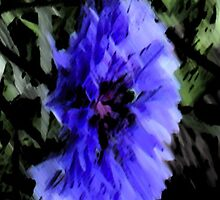 Cornflower by JuliaJay