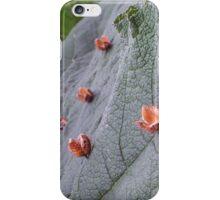 gunnera beech iPhone Case/Skin